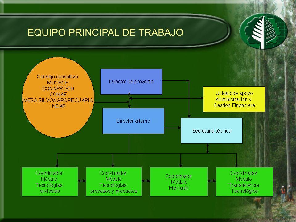 EQUIPO PRINCIPAL DE TRABAJO