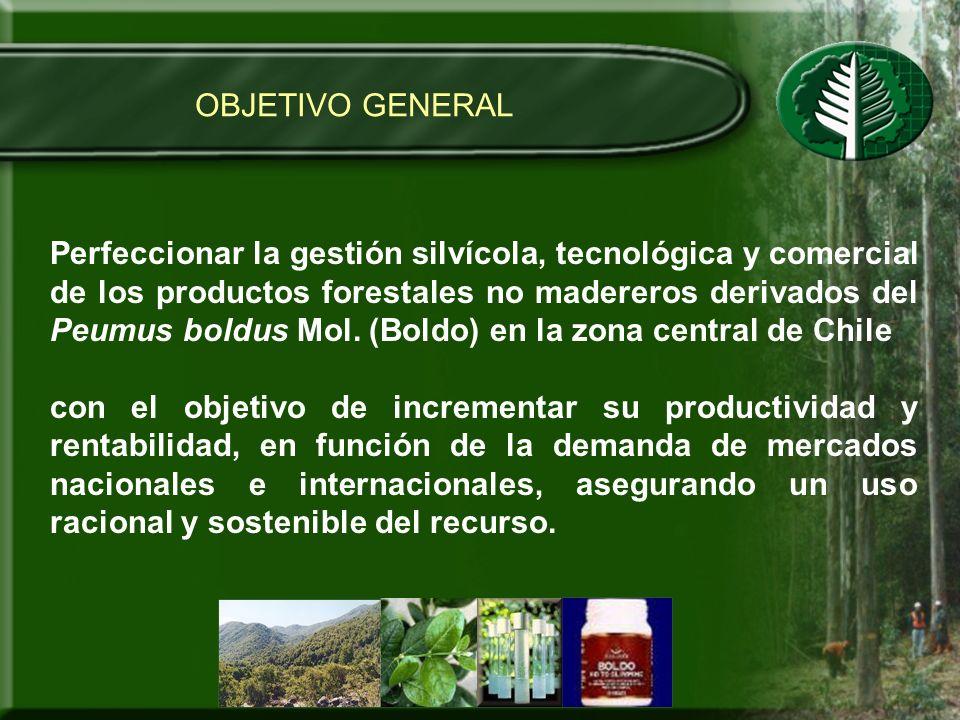 OBJETIVO GENERAL Perfeccionar la gestión silvícola, tecnológica y comercial de los productos forestales no madereros derivados del Peumus boldus Mol.