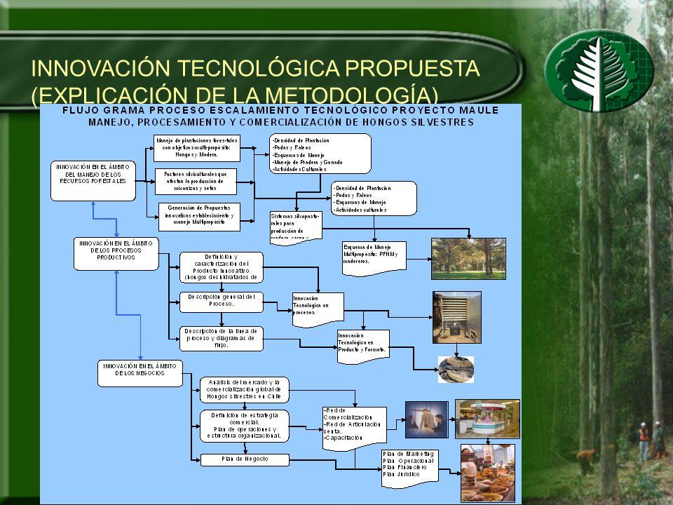 RESULTADOS Y/O PRODUCTOS ESPERADOS Guía experta de silvicultura y manejo de formaciones naturales de Boldo.