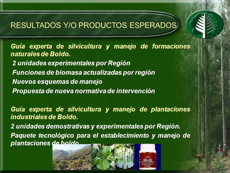 RESULTADOS Y/O PRODUCTOS ESPERADOS Guía experta de silvicultura y manejo de formaciones naturales de Boldo. 2 unidades experimentales por Región Funci