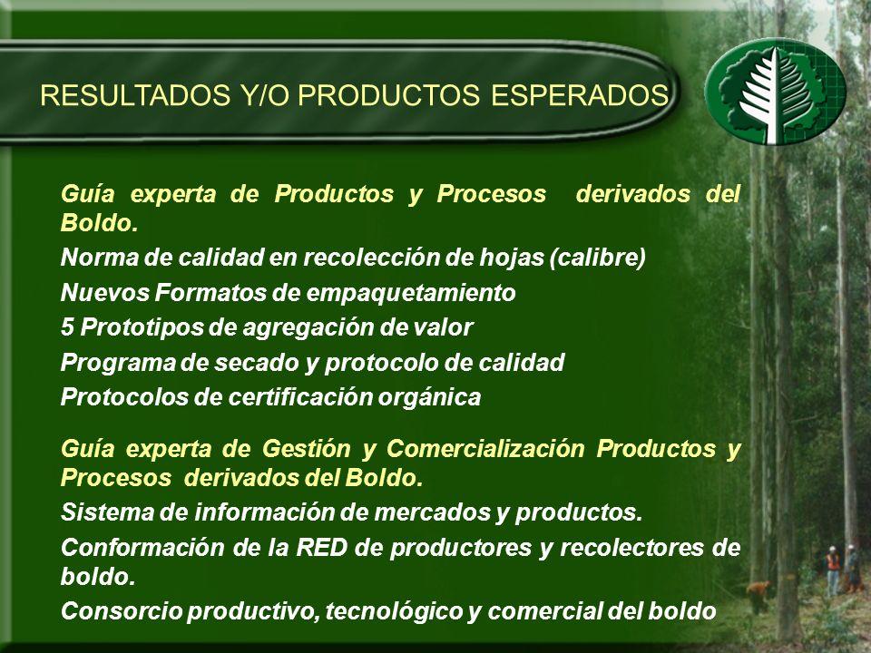 RESULTADOS Y/O PRODUCTOS ESPERADOS Guía experta de Productos y Procesos derivados del Boldo. Norma de calidad en recolección de hojas (calibre) Nuevos