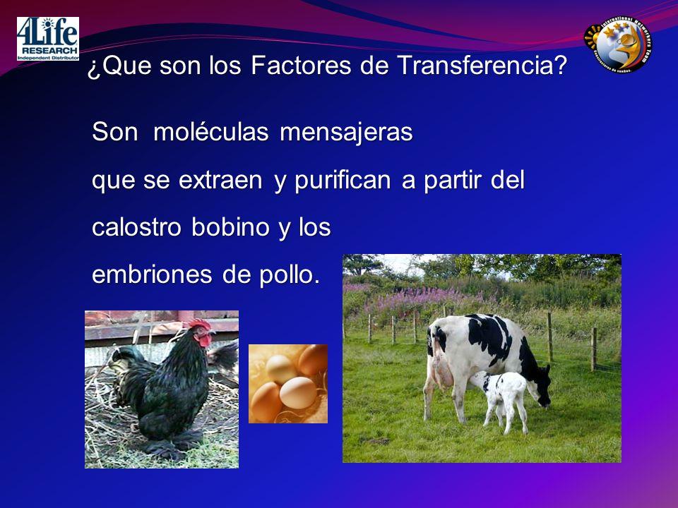 Son moléculas mensajeras que se extraen y purifican a partir del calostro bobino y los embriones de pollo. ¿Que son los Factores de Transferencia?