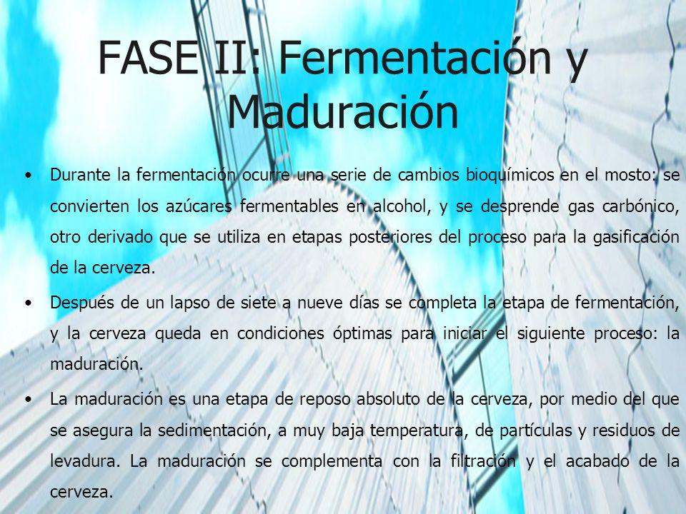 FASE II: Fermentación y Maduración Durante la fermentación ocurre una serie de cambios bioquímicos en el mosto: se convierten los azúcares fermentable
