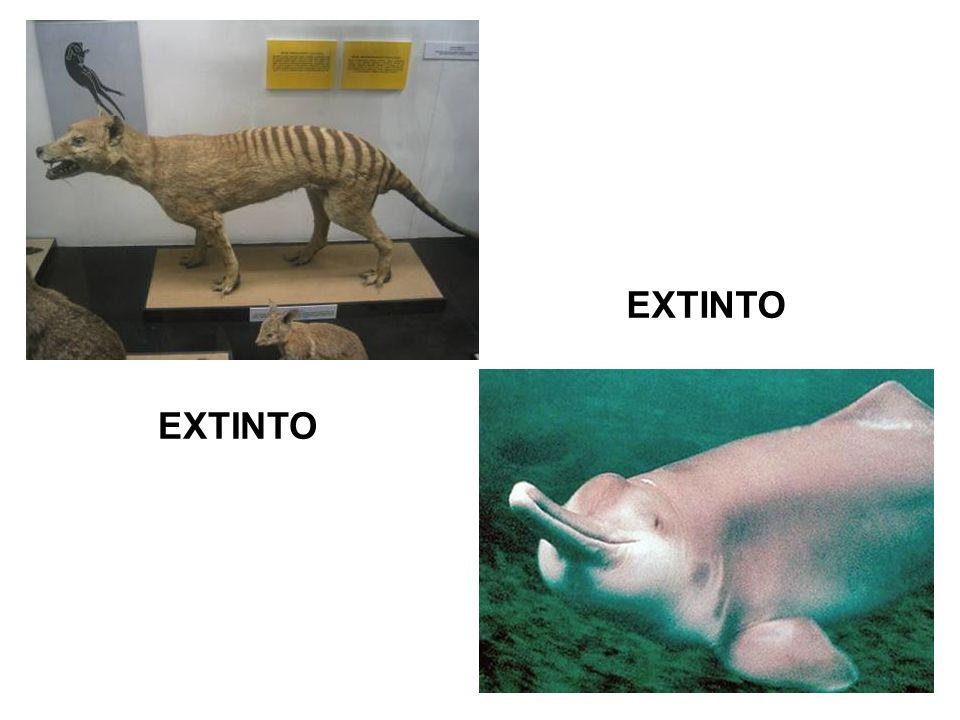 EXTINTO