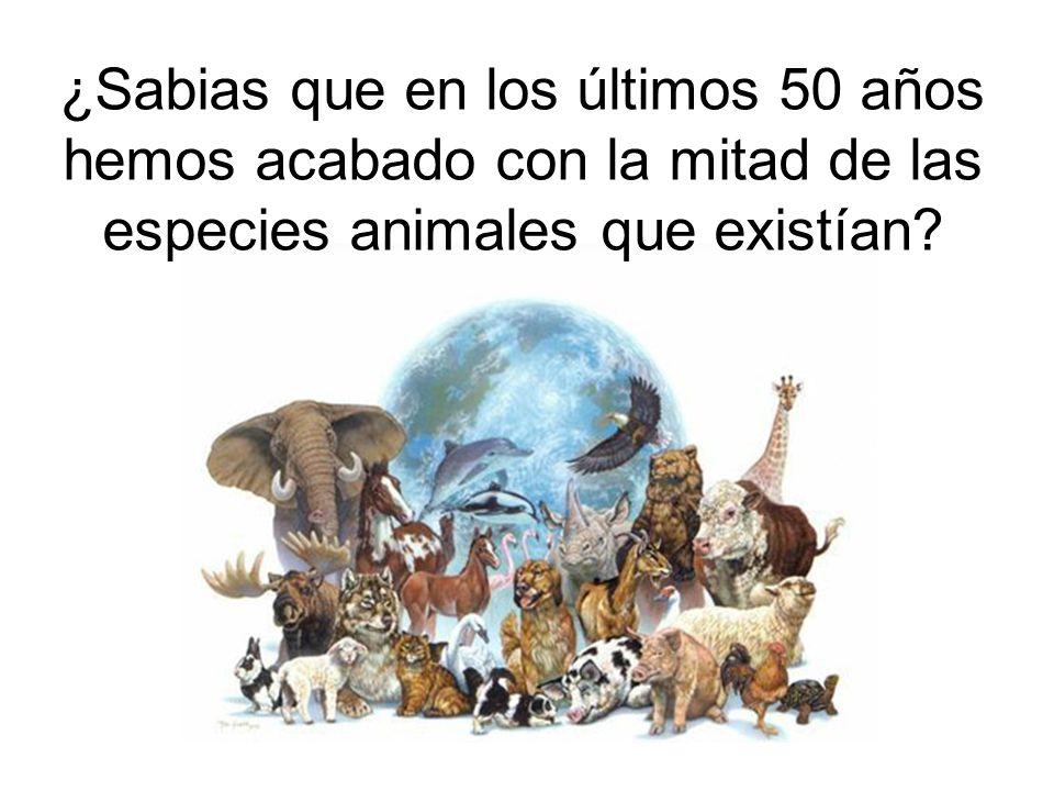 ¿Sabias que en los últimos 50 años hemos acabado con la mitad de las especies animales que existían?