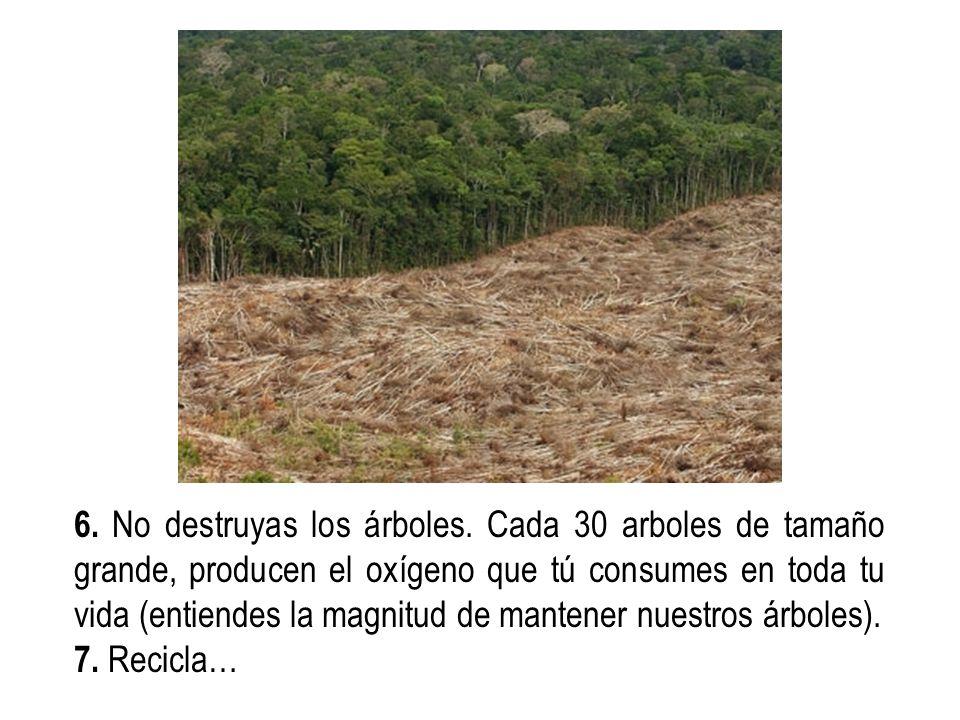 6. No destruyas los árboles. Cada 30 arboles de tamaño grande, producen el oxígeno que tú consumes en toda tu vida (entiendes la magnitud de mantener