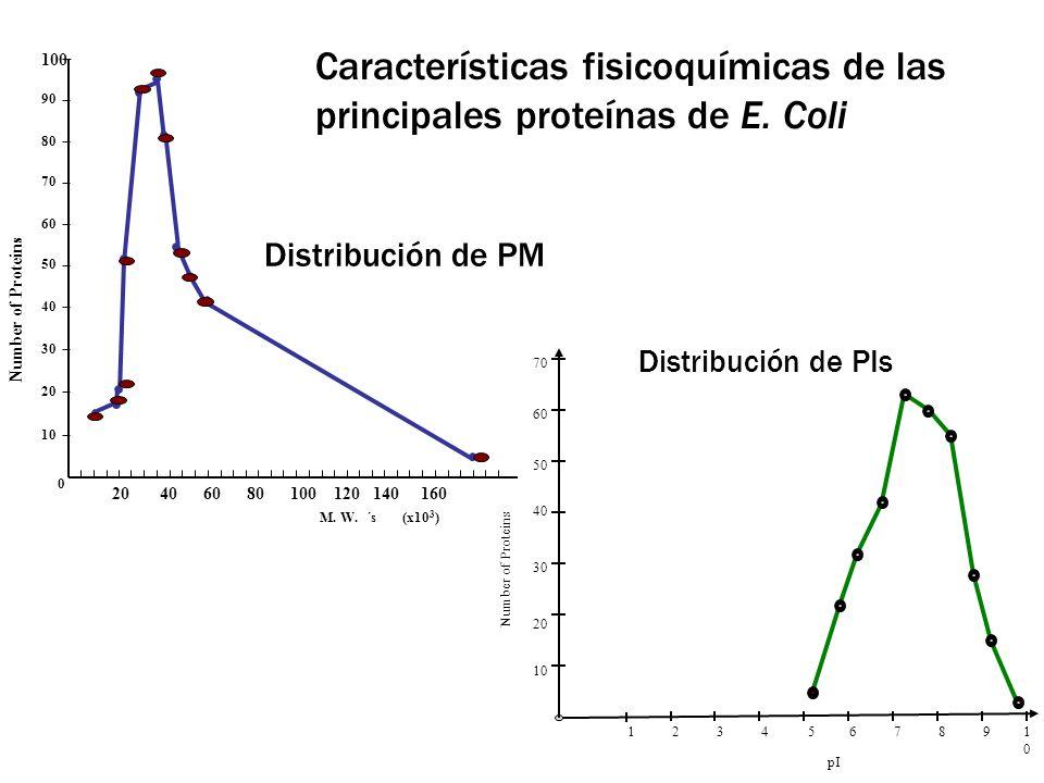 Distribución de PM 20 40 60 80 100 120 140 160 100 M. W. ´s (x10 3 ) 90 80 70 30 60 50 40 20 10 0 Number of Proteins Distribución de PIs pI 1234567891