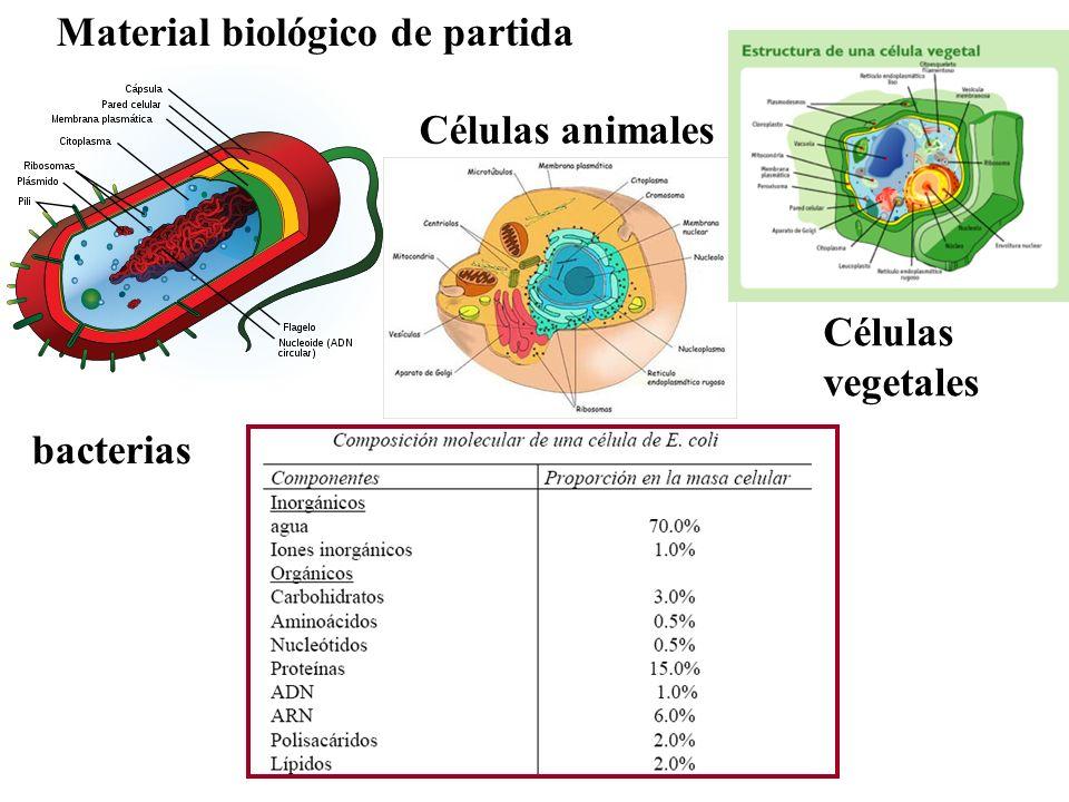 bacterias Células animales Células vegetales Material biológico de partida