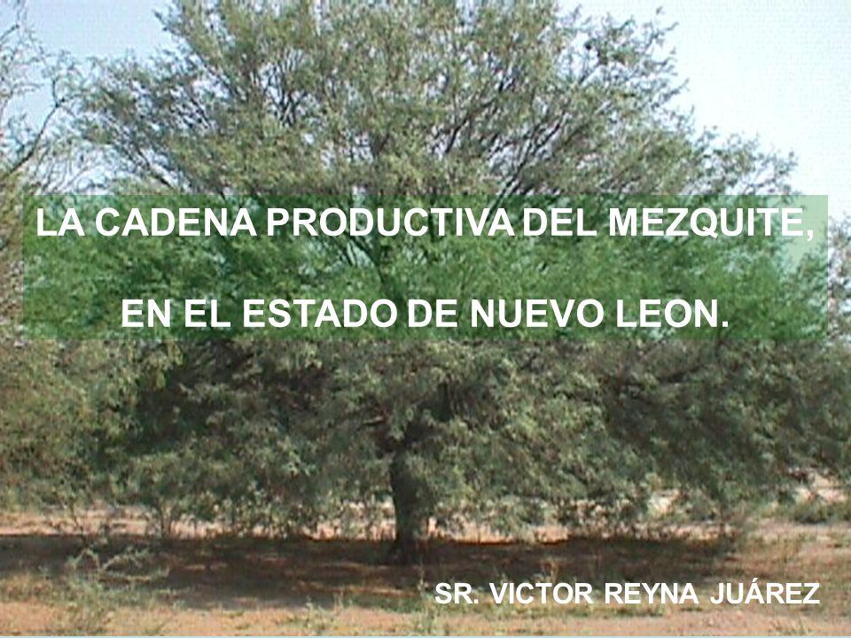 LA CADENA PRODUCTIVA DEL MEZQUITE, EN EL ESTADO DE NUEVO LEON. SR. VICTOR REYNA JUÁREZ