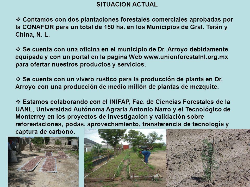 SITUACION ACTUAL Contamos con dos plantaciones forestales comerciales aprobadas por la CONAFOR para un total de 150 ha. en los Municipios de Gral. Ter