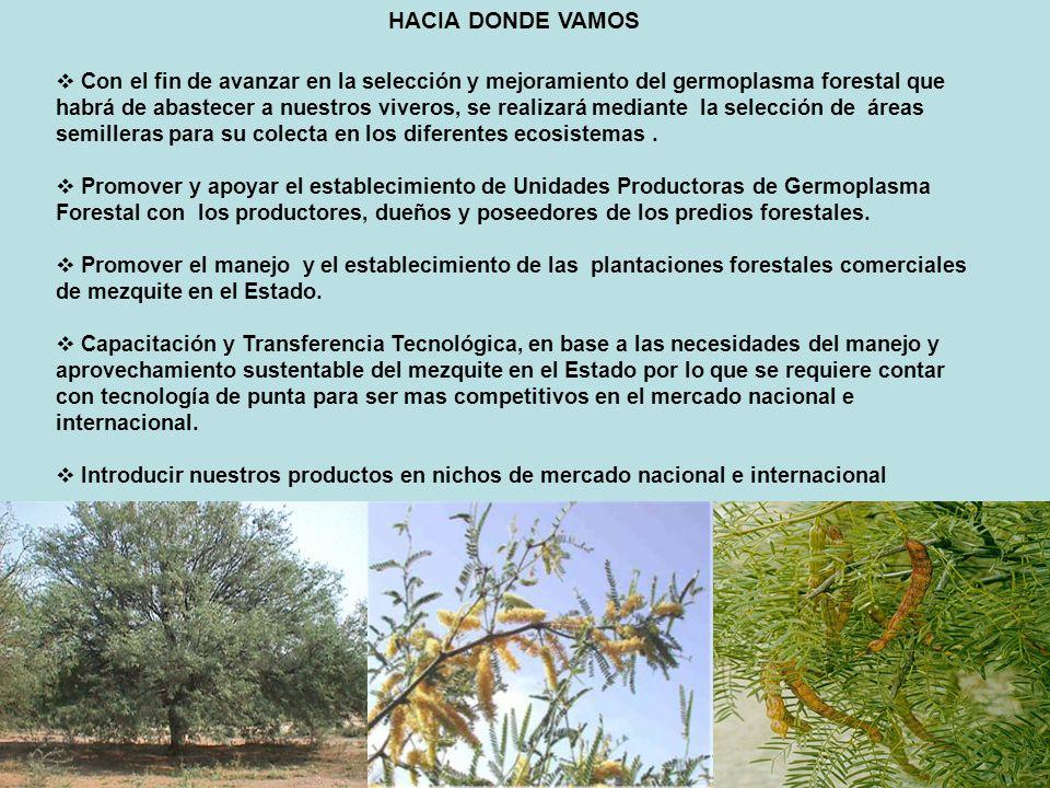 HACIA DONDE VAMOS Con el fin de avanzar en la selección y mejoramiento del germoplasma forestal que habrá de abastecer a nuestros viveros, se realizar