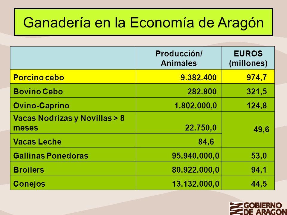 Ganadería en la Economía de Aragón Producción/ Animales EUROS (millones) Porcino cebo 9.382.400 974,7 Bovino Cebo 282.800 321,5 Ovino-Caprino 1.802.00