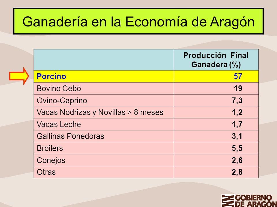 Ganadería en la Economía de Aragón Producción Final Ganadera (%) Porcino 57 Bovino Cebo 19 Ovino-Caprino 7,3 Vacas Nodrizas y Novillas > 8 meses 1,2 V