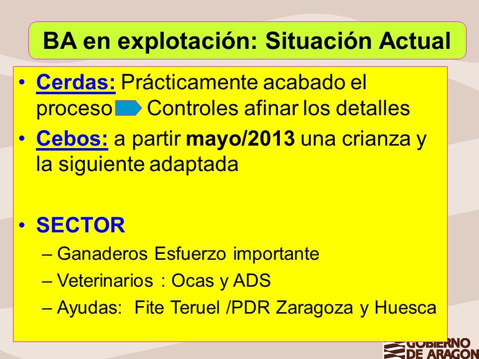 Cerdas: Prácticamente acabado el proceso Controles afinar los detalles Cebos: a partir mayo/2013 una crianza y la siguiente adaptada SECTOR –Ganaderos