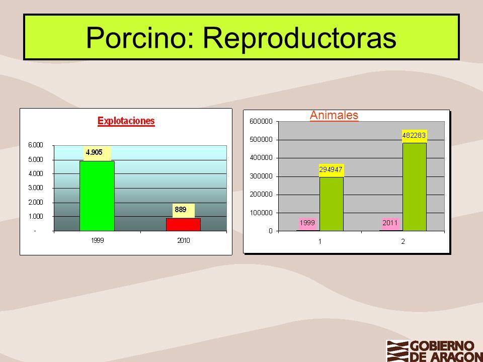 Porcino: Reproductoras Animales