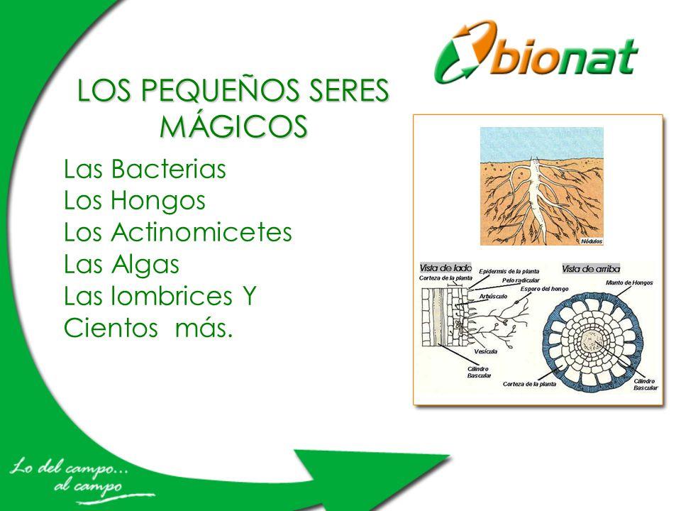 Las Bacterias Los Hongos Los Actinomicetes Las Algas Las lombrices Y Cientos más. LOS PEQUEÑOS SERES MÁGICOS