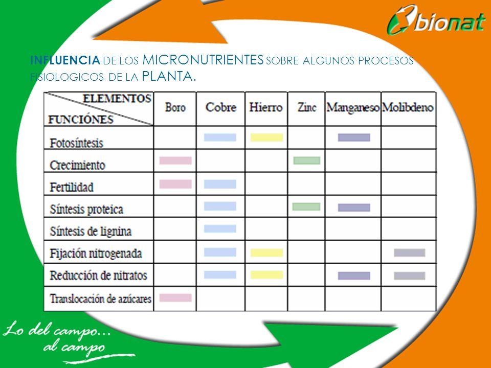 INFLUENCIA DE LOS MICRONUTRIENTES SOBRE ALGUNOS PROCESOS FISIOLOGICOS DE LA PLANTA.