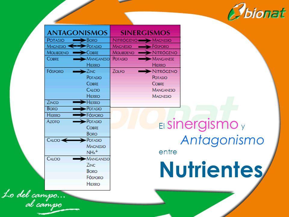 El sinergismo y Antagonismo entre Nutrientes