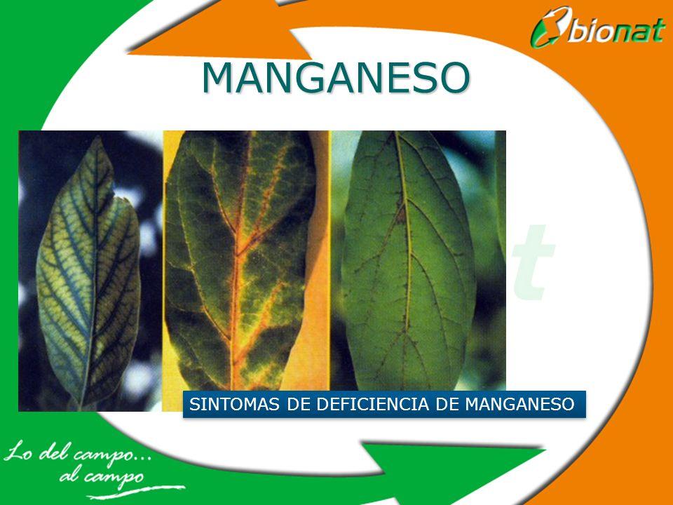 MANGANESO SINTOMAS DE DEFICIENCIA DE MANGANESO