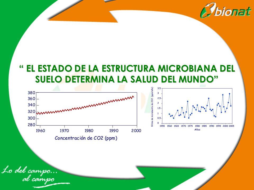 EL ESTADO DE LA ESTRUCTURA MICROBIANA DEL SUELO DETERMINA LA SALUD DEL MUNDO EL ESTADO DE LA ESTRUCTURA MICROBIANA DEL SUELO DETERMINA LA SALUD DEL MU