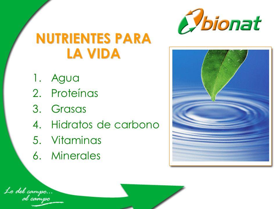 NUTRIENTES PARA LA VIDA 1.Agua 2.Proteínas 3.Grasas 4.Hidratos de carbono 5.Vitaminas 6.Minerales