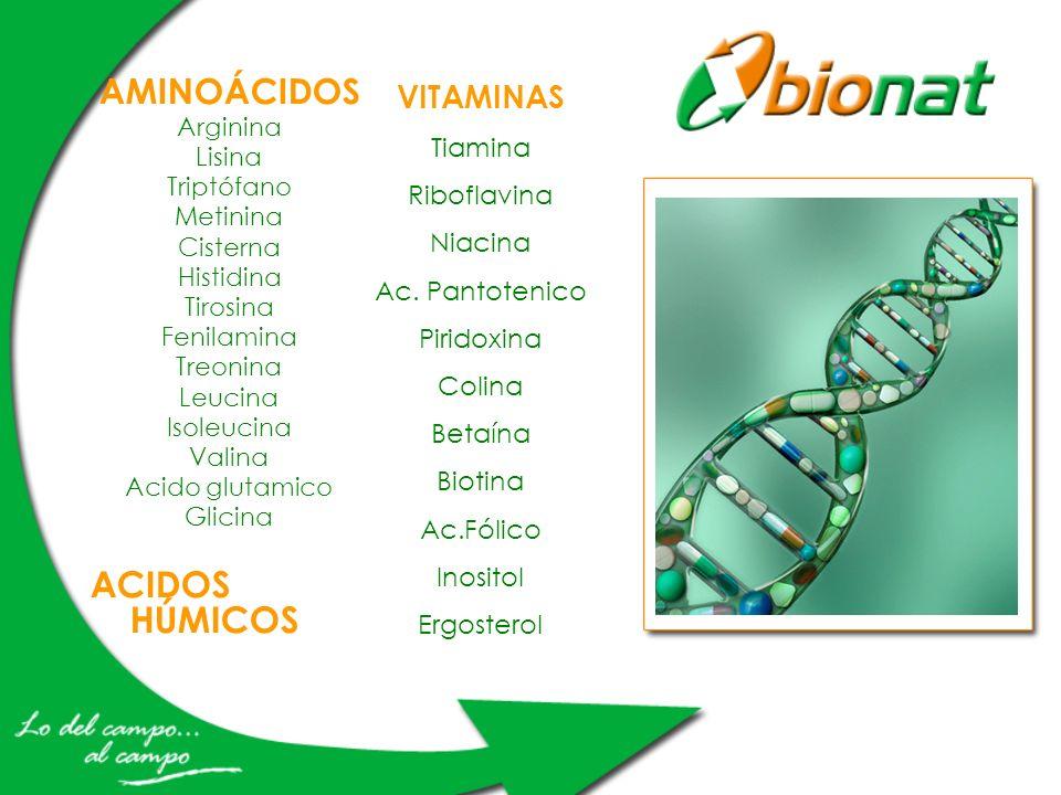 AMINOÁCIDOS Arginina Lisina Triptófano Metinina Cisterna Histidina Tirosina Fenilamina Treonina Leucina Isoleucina Valina Acido glutamico Glicina ACID