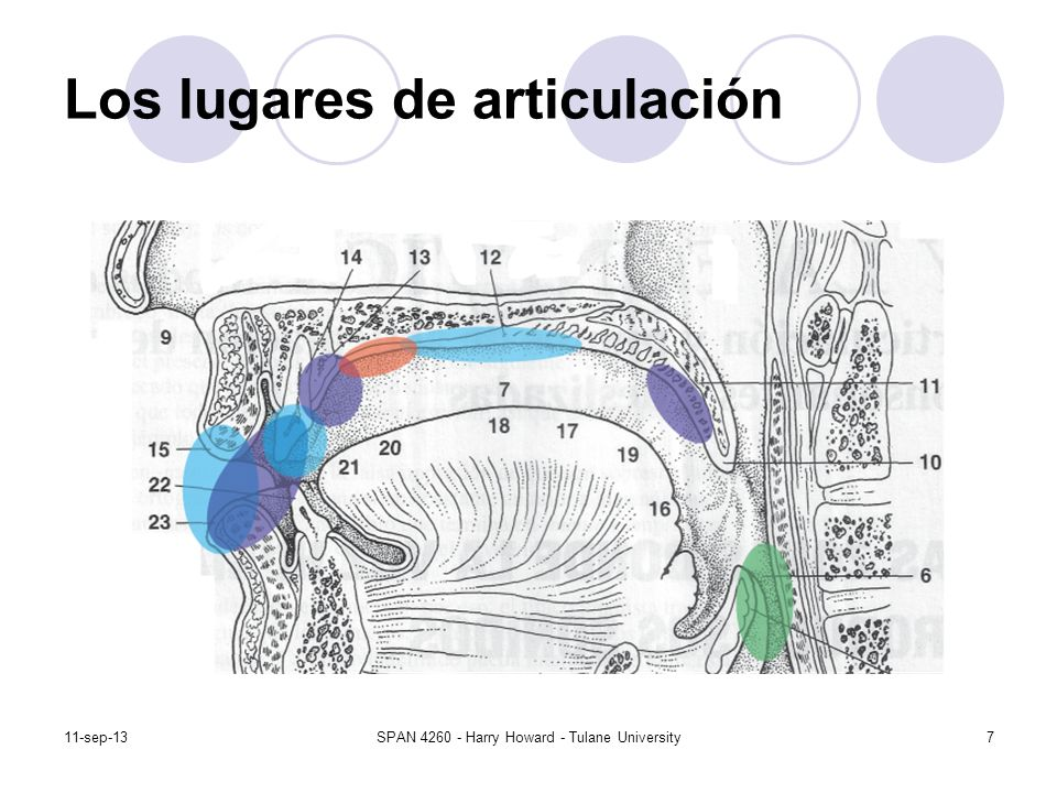 11-sep-13SPAN 4260 - Harry Howard - Tulane University8 Los lugares de articulación Bilabial Labiodental Interdental Dental Alveolar Alveopalatal Palatal Velar Uvular Glotal/ninguno
