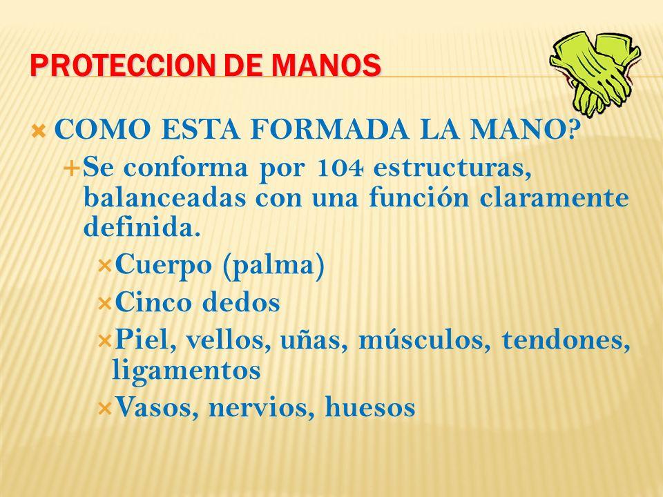 PROTECCION DE MANOS COMO ESTA FORMADA LA MANO.