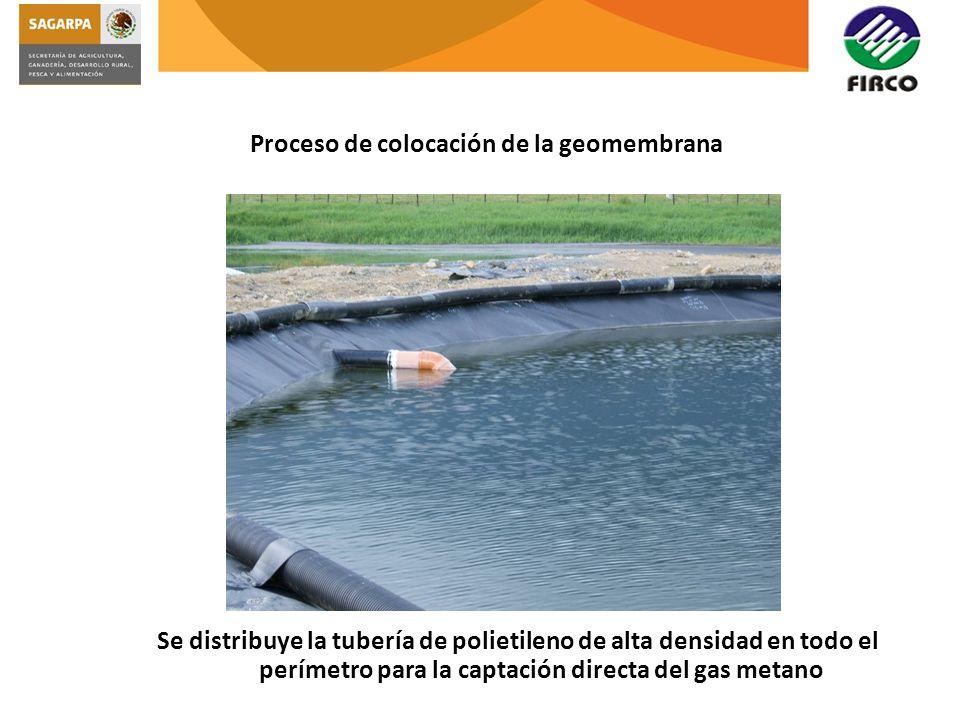 Proceso de colocación de la geomembrana Se distribuye la tubería de polietileno de alta densidad en todo el perímetro para la captación directa del ga
