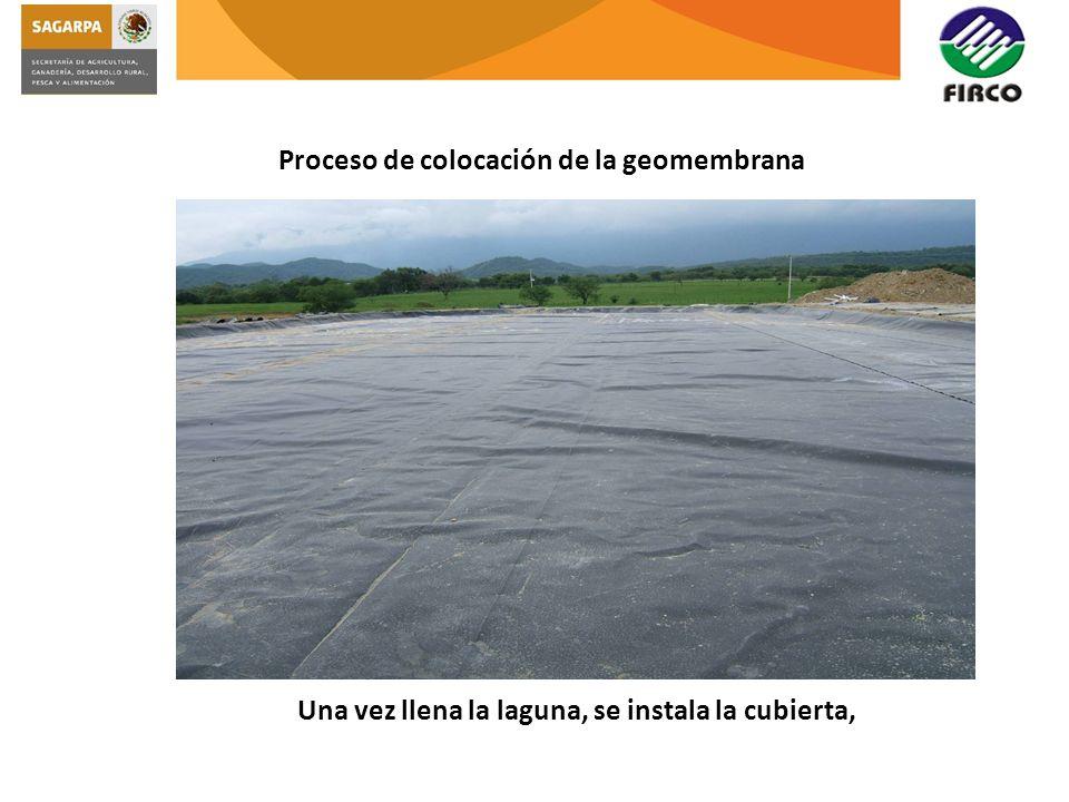 Proceso de colocación de la geomembrana Una vez llena la laguna, se instala la cubierta,