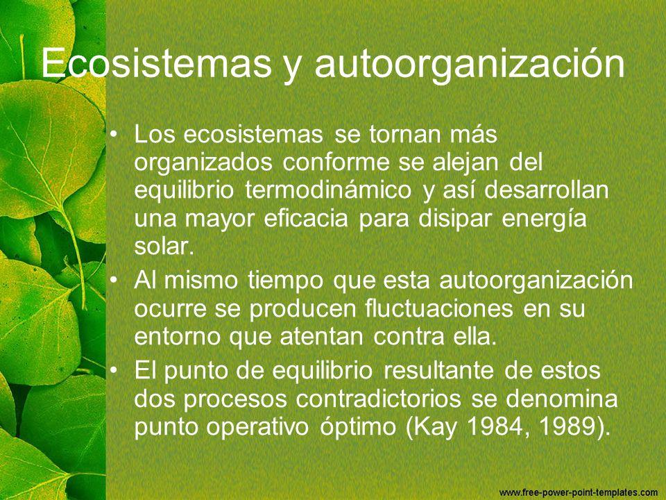 Ecosistemas y autoorganización Los ecosistemas se tornan más organizados conforme se alejan del equilibrio termodinámico y así desarrollan una mayor e