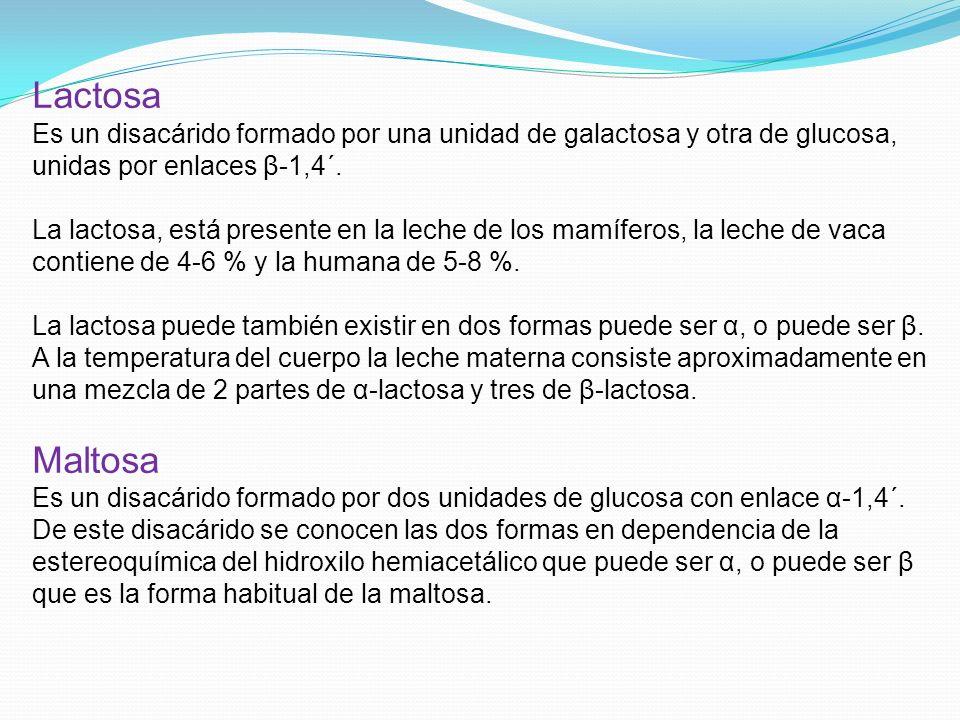 Lactosa Es un disacárido formado por una unidad de galactosa y otra de glucosa, unidas por enlaces β-1,4΄. La lactosa, está presente en la leche de lo