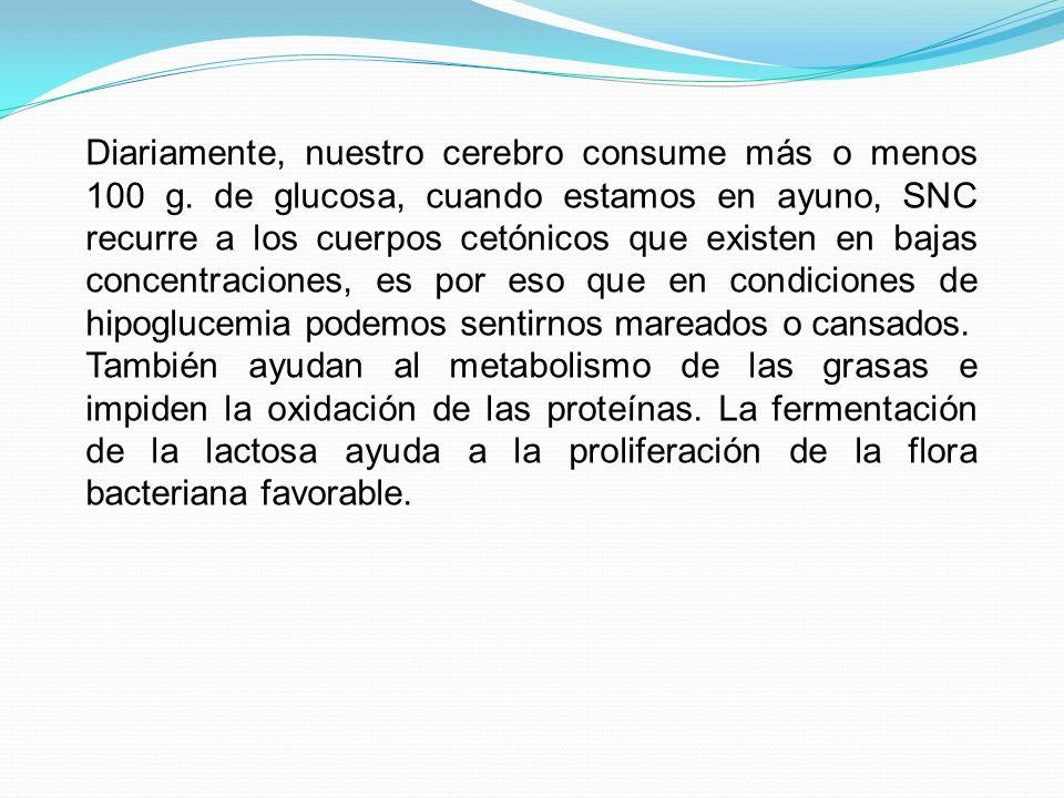 Diariamente, nuestro cerebro consume más o menos 100 g. de glucosa, cuando estamos en ayuno, SNC recurre a los cuerpos cetónicos que existen en bajas