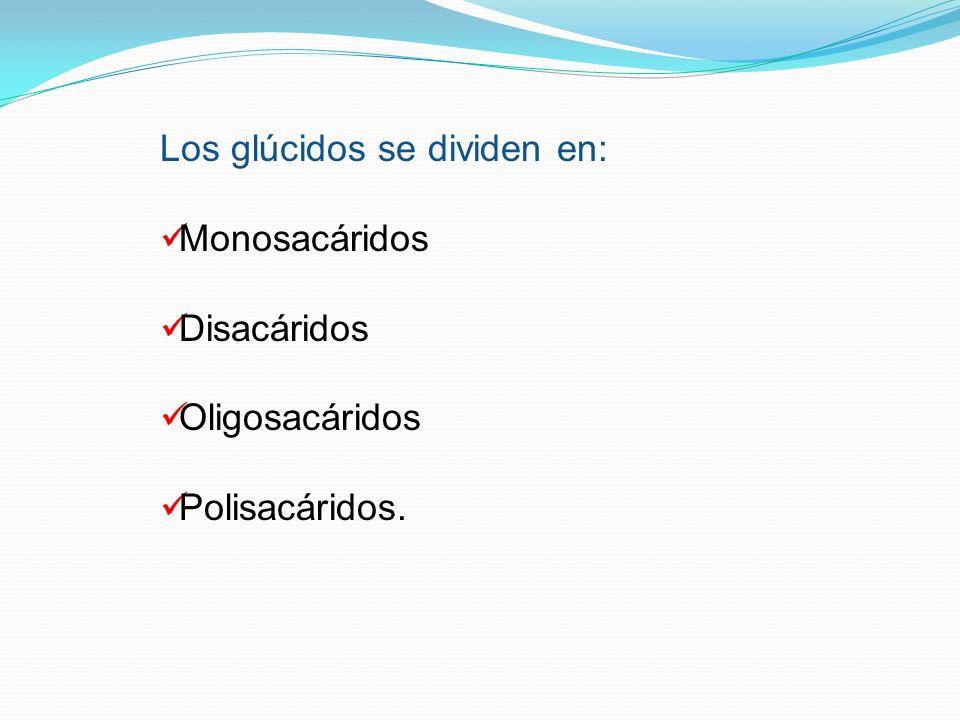 Los glúcidos se dividen en: Monosacáridos Disacáridos Oligosacáridos Polisacáridos.