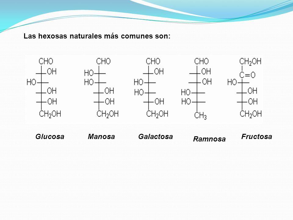 La glucosa también recibe el nombre de dextrosa, también azúcar de sangre, pues está presente en la sangre humana en concentración de 65-110 mg/100 ml.