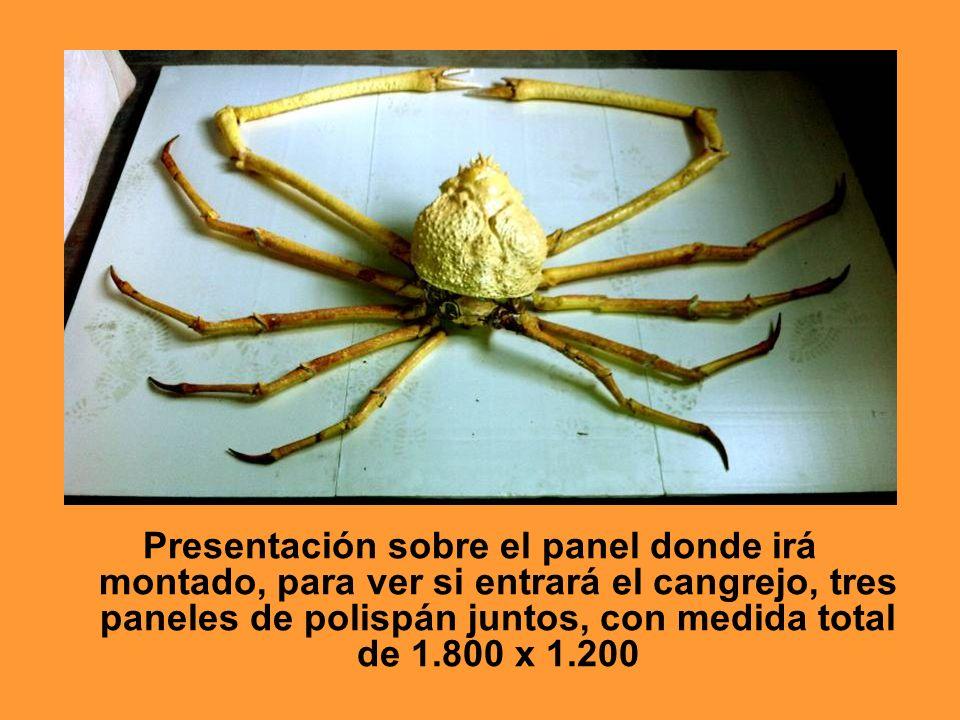 Presentación sobre el panel donde irá montado, para ver si entrará el cangrejo, tres paneles de polispán juntos, con medida total de 1.800 x 1.200