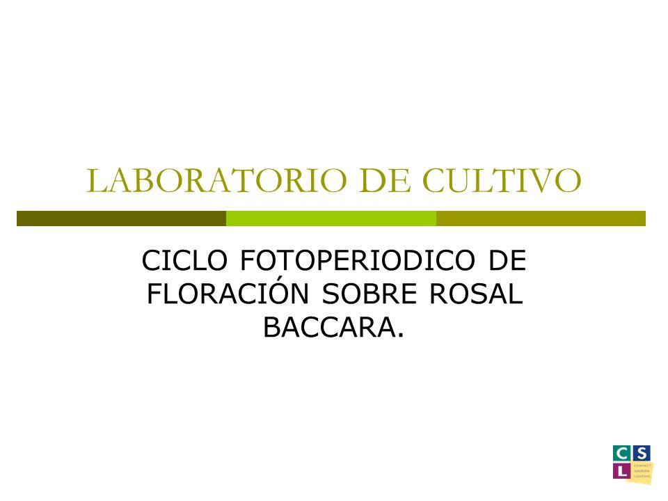 Datos de partida Clase de muestra: Rosal Baccara.