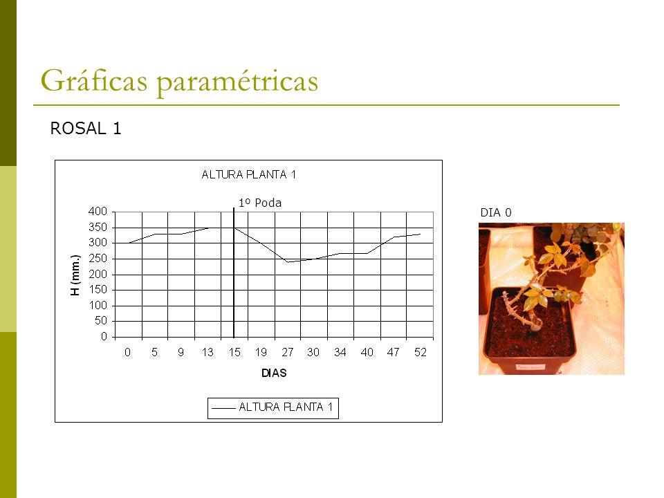 Gráficas paramétricas 1º Poda ROSAL 2 2º Poda DIA 0
