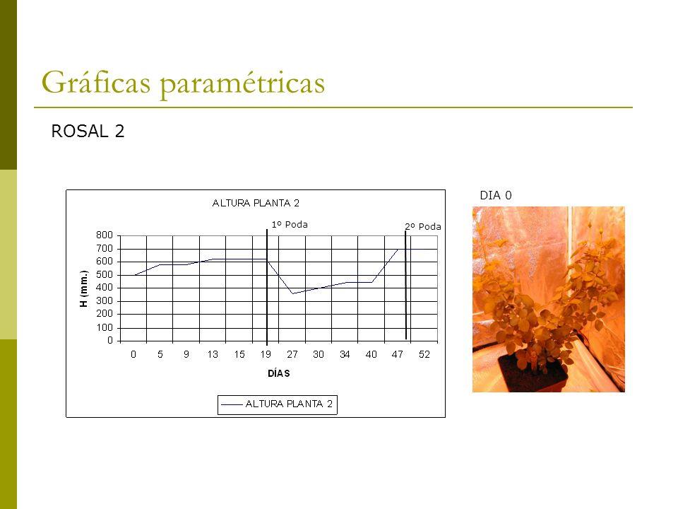 Gráficas paramétricas ROSAL 3 1º Poda2º Poda DIA 0