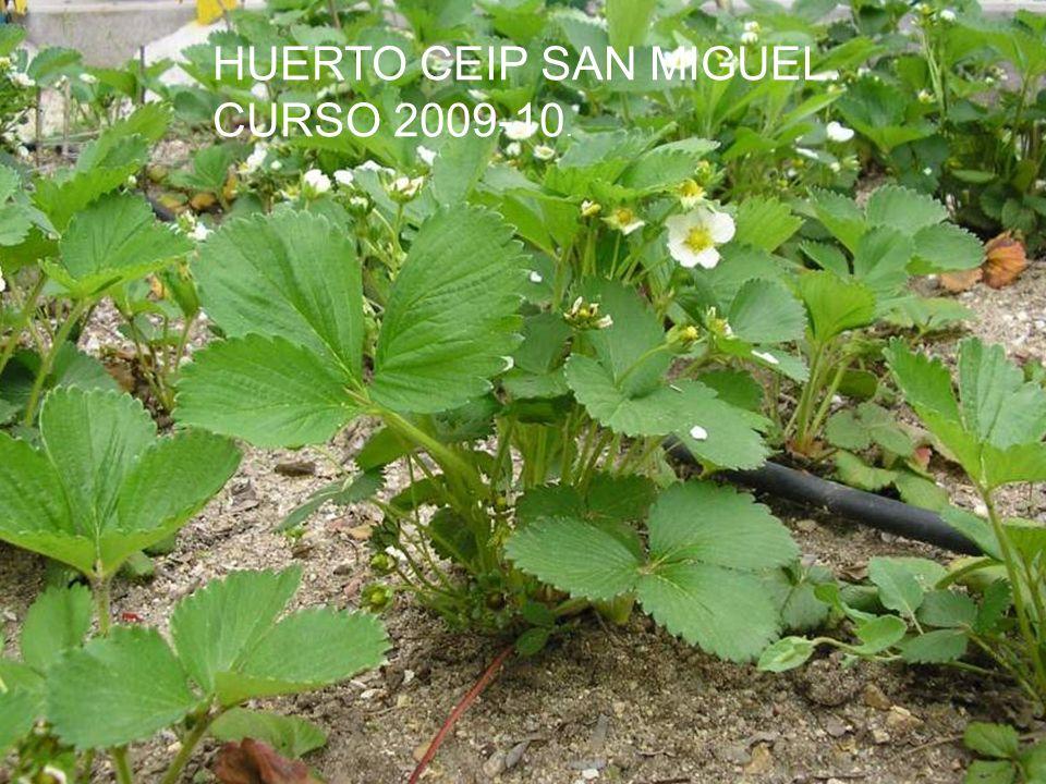 HUERTO CEIP SAN MIGUEL. CURSO 2009-10.