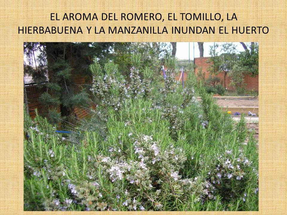 COMBINACIONES DE ELEMENTOS.