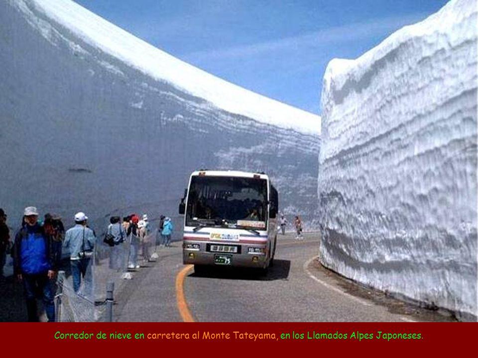 Corredor de nieve en carretera al Monte Tateyama, en los Llamados Alpes Japoneses.
