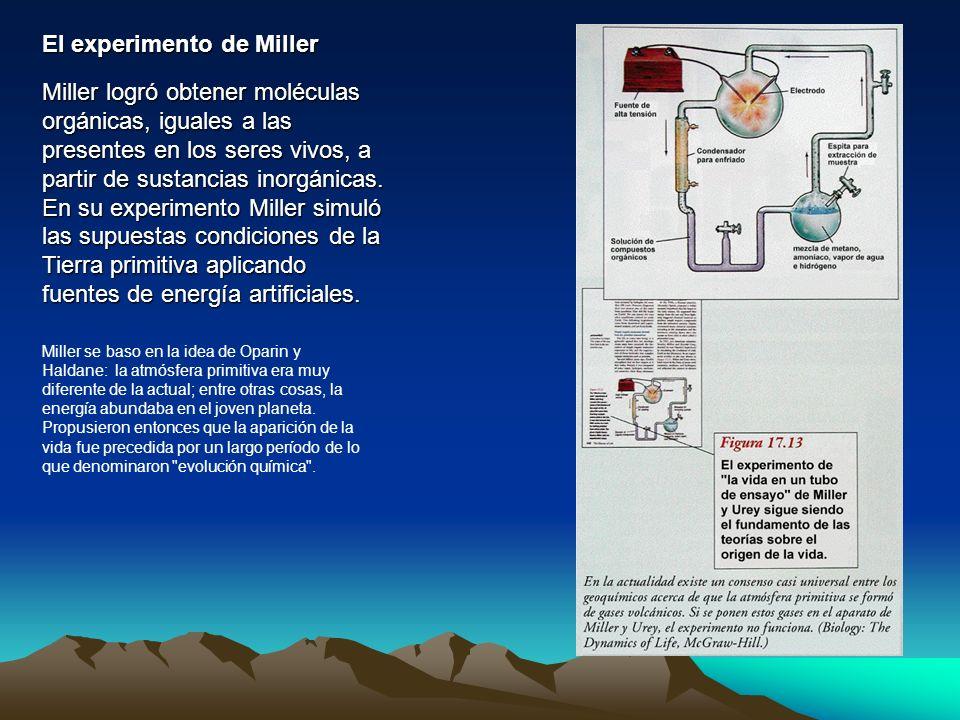 El experimento de Miller Miller logró obtener moléculas orgánicas, iguales a las presentes en los seres vivos, a partir de sustancias inorgánicas. En