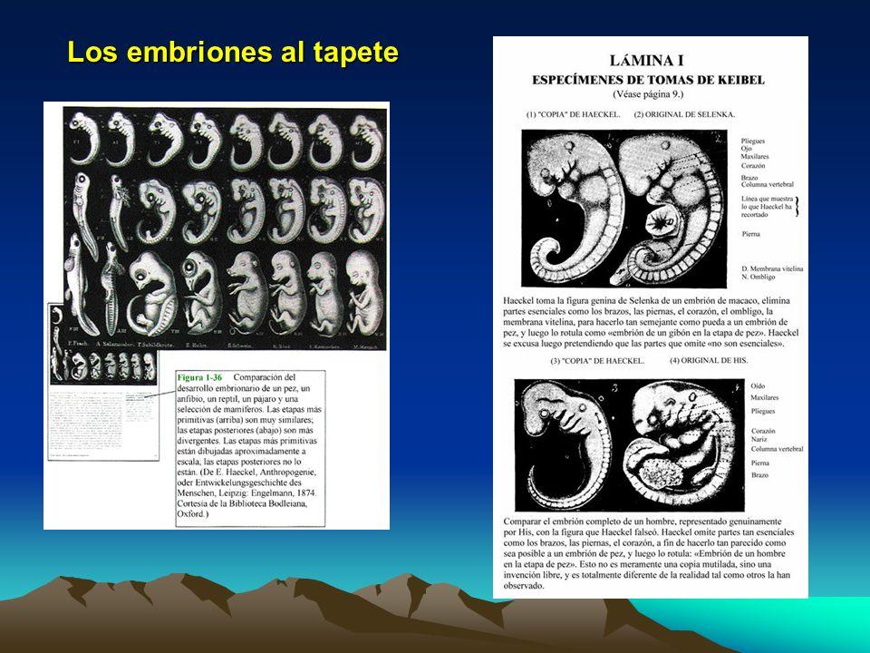 Los embriones al tapete
