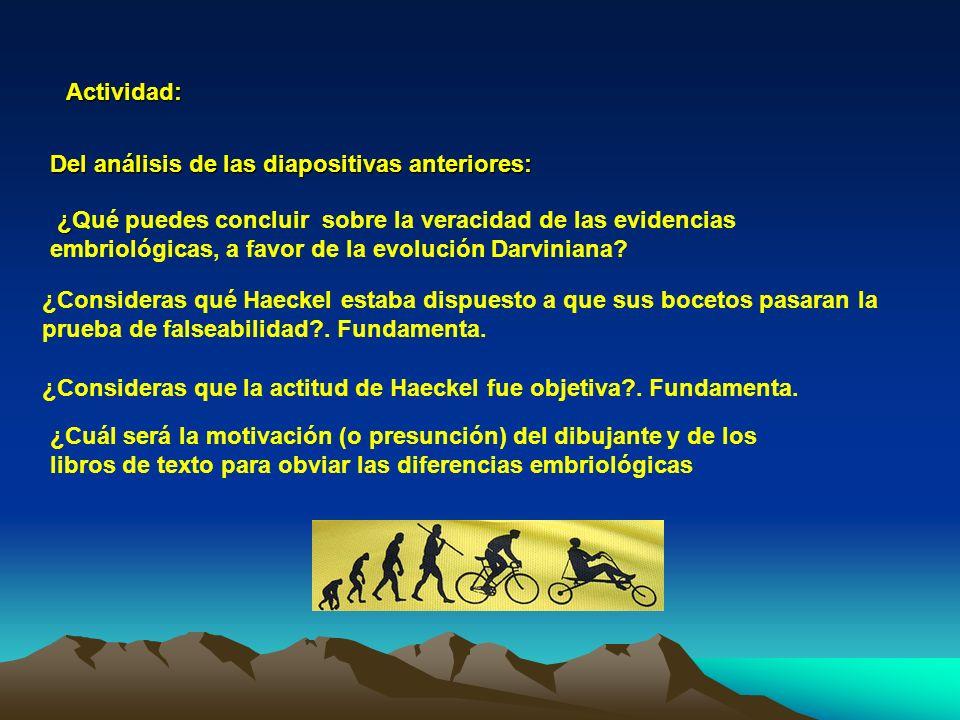 Actividad: Del análisis de las diapositivas anteriores: ¿ ¿Qué puedes concluir sobre la veracidad de las evidencias embriológicas, a favor de la evolu