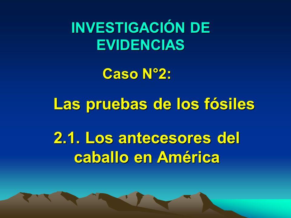 INVESTIGACIÓN DE EVIDENCIAS Caso N°2: Las pruebas de los fósiles 2.1. Los antecesores del caballo en América