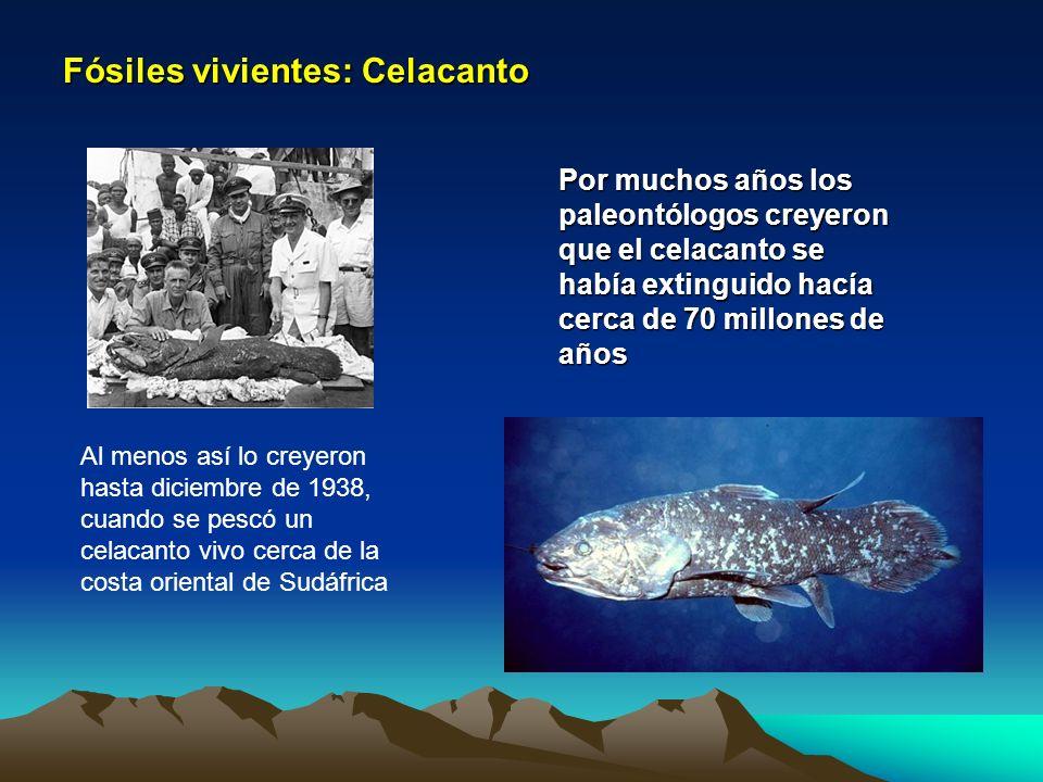 Fósiles vivientes: Celacanto Por muchos años los paleontólogos creyeron que el celacanto se había extinguido hacía cerca de 70 millones de años Al men