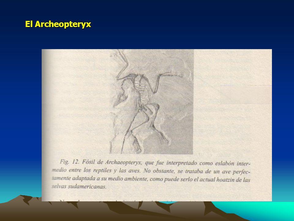 El Archeopteryx