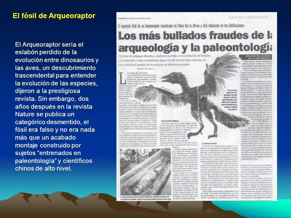 El fósil de Arqueoraptor El Arqueoraptor sería el eslabón perdido de la evolución entre dinosaurios y las aves, un descubrimiento trascendental para e