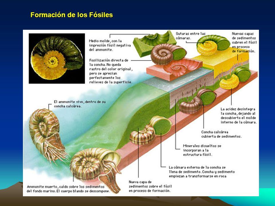 Formación de los Fósiles